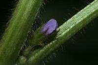 Photographie n°jlt048547 du taxon