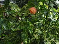 Photographie n°jlt049347 du taxon