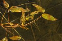 Photographie n°jlt049526 du taxon