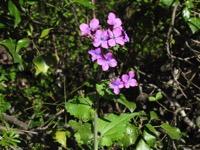 Photographie n°jlt052486 du taxon