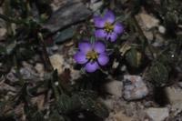 Photographie n°jlt052577 du taxon