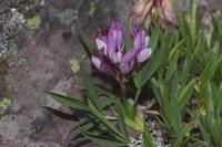 Photographie n°jlt055739 du taxon