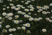 Photographie n°jlt058359 du taxon