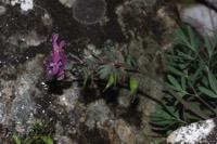 Photographie n°jlt058589 du taxon