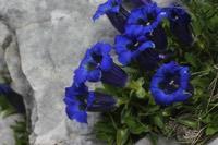 Photographie n°jlt059860 du taxon