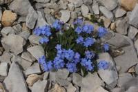 Photographie n°jlt061291 du taxon
