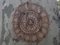 Photographie n°jlt062983 du taxon