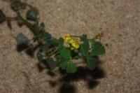 Photographie n°jlt067599 du taxon