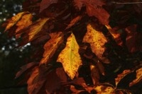 Photographie n°jlt067846 du taxon