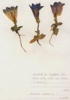Photographie n°jlt071971 du taxon