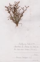 Photographie n°jlt072756 du taxon