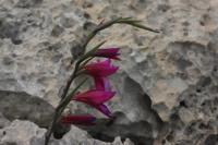 Photographie n°jlt079119 du taxon