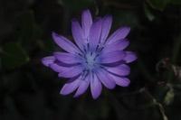 Photographie n°jlt082997 du taxon