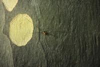 Photographie n°jlt084219 du taxon