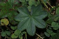 Photographie n°jlt089102 du taxon