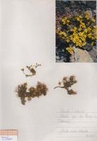 Photographie n°jlt090519 du taxon
