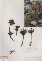 Photographie n°jlt090520 du taxon