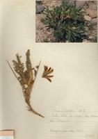 Photographie n°jlt090565 du taxon
