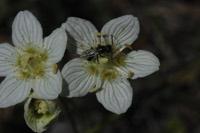 Photographie n°jlt094211 du taxon