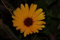Photographie n°jlt095490 du taxon