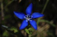 Photographie n°jlt099481 du taxon