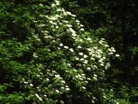 Photographie n°jlt103601 du taxon