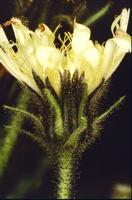 Photographie n°jmt005288 du taxon