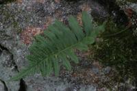 Photographie n°yq003344 du taxon