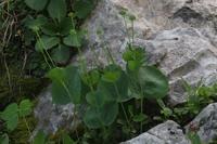 Photographie n°yq005932 du taxon
