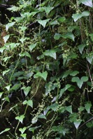 Photographie n°yq020589 du taxon